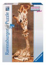 Ravensburger 15115 panorama puzzle - Zsiráfok (1000 db-os)