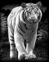 Reeves Ezüst képkarcoló - Tigris